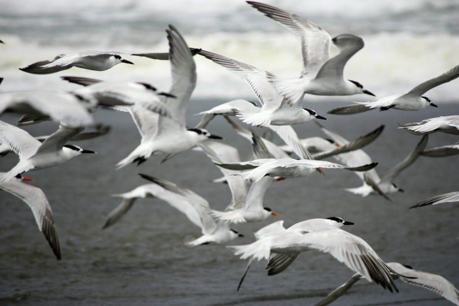 Dùng chim để giám sát ô nhiễm môi trường