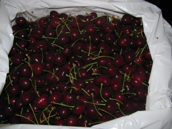 Bán Cherry Fresta