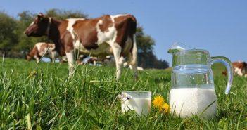 Hãng sữa tươi tiệt trùng giá rẻ an toàn