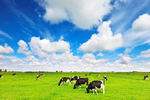 Hãng sữa tươi không đường nhập khẩu an toàn nhất