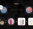 lưu trữ tế bào gốc cuống rốn