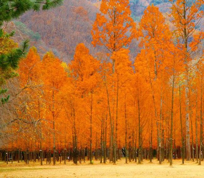 du lịch jeju mùa thu