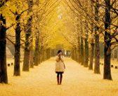 Muốn đi du lịch tự túc Jeju Hàn Quốc thì đi mùa nào đẹp?