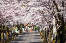 du lịch seoul tự túc mùa nào đẹp