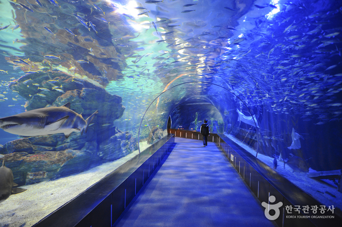 Viện hải dương Busan Aquarium
