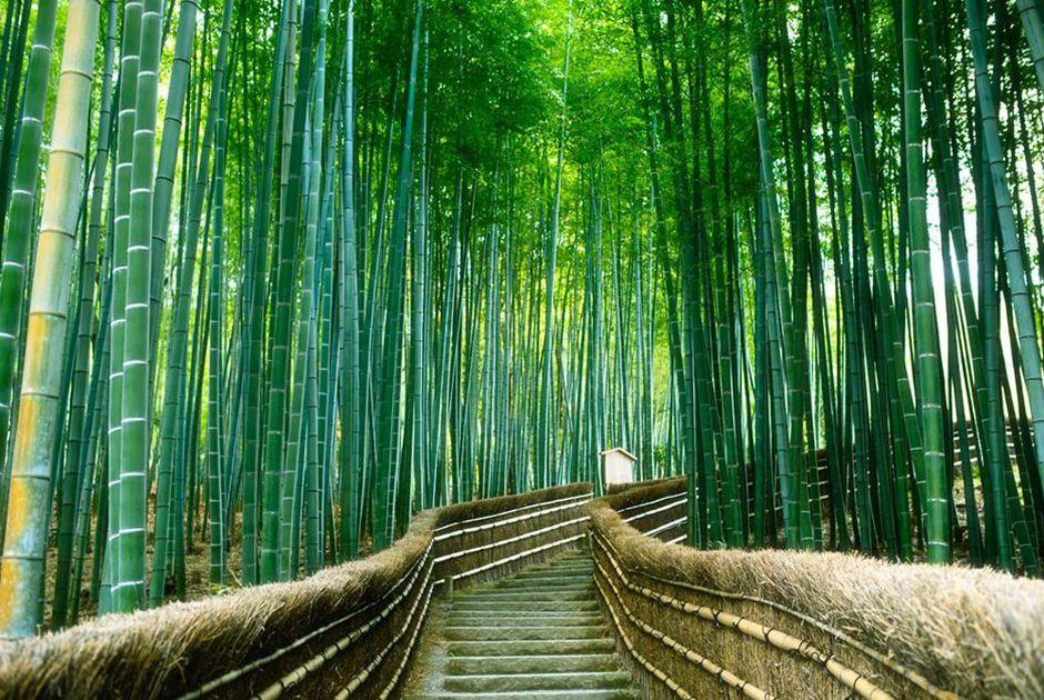 tham quan rừng tre Arashiyama Kyoto